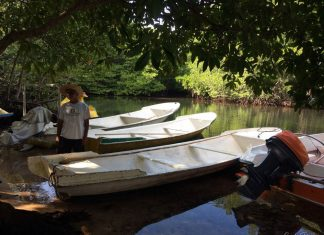 Mangrove Forest Nusa Lembongan Bali - 1