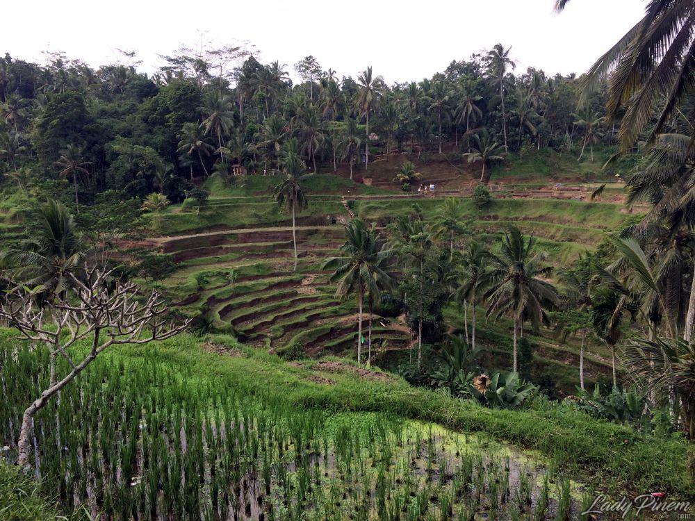 Menyambangi tegallalang rice terrace bali lady pinem for Terrace ubud bali